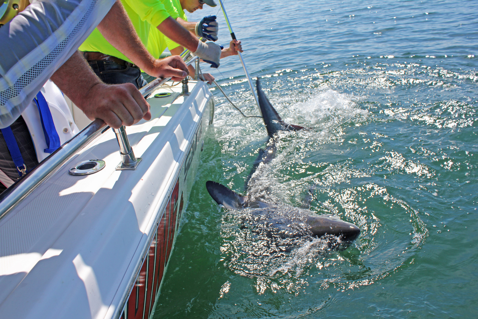 St. Andrews Sport Fishing - CATCH - TAG - RELEASE Shark Fishing
